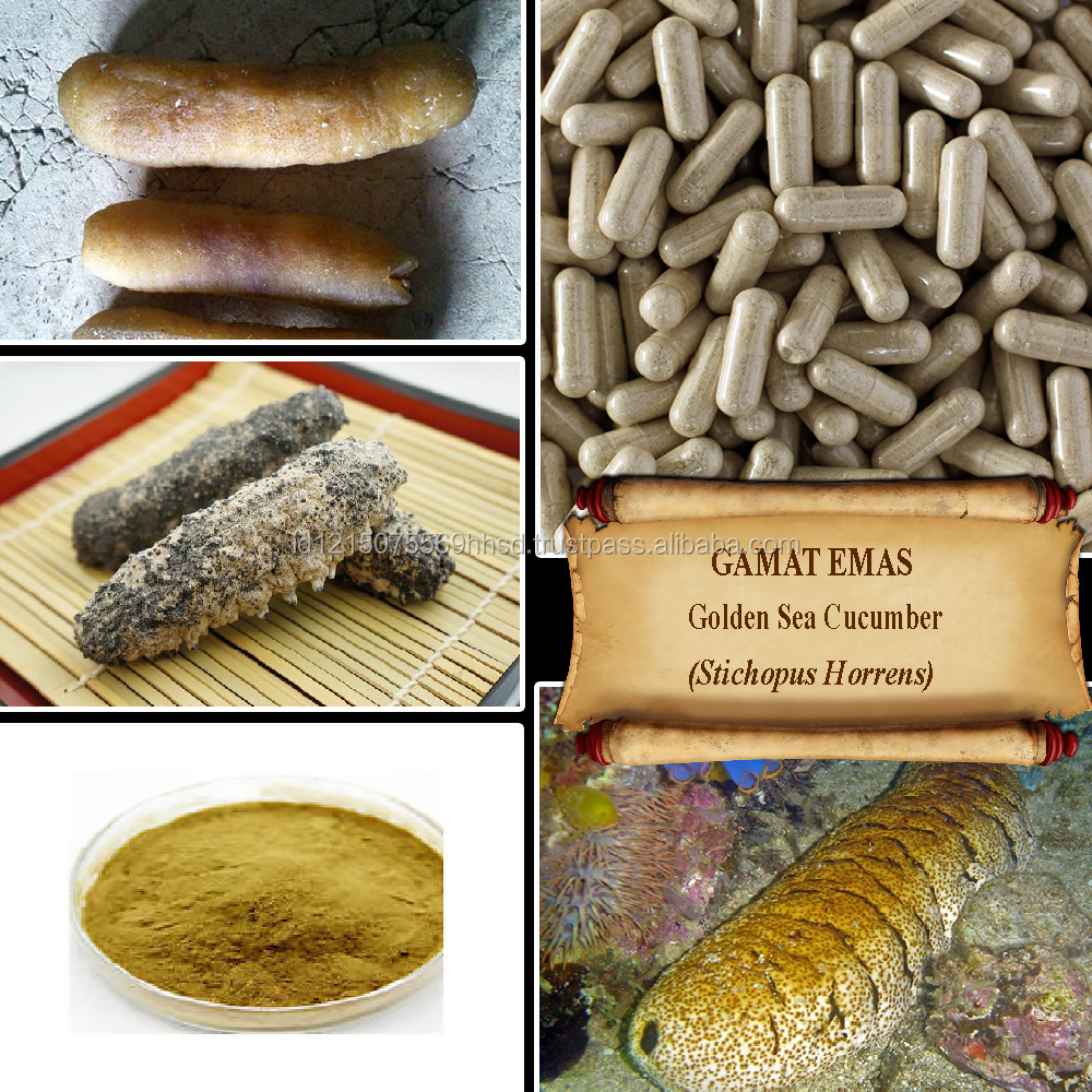 GOLDEN SEA CUCUMBER / Gamat Emas / Stichopus Horrens / Anti Aging / Fresh Powder, Extract, Capsules, Liquid, Oil