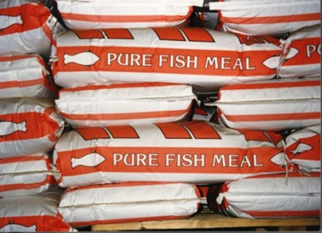Fish Meal 65% (animal feed)
