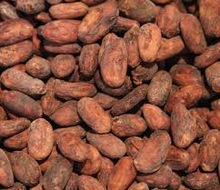 Grade A Cocoa Beans For Sale