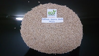 Natural Sesame Seeds importers