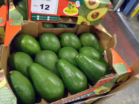 cheap price Fresh green Avocado for sale