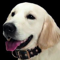 Look & Find GPS Collar Pet Tracker + 3 months free subscription