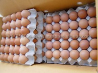 Farm Fresh chicken egg white and brown size : 40g-50g-60g-65g-70g