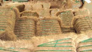 Coconut Coir Fibre best offer