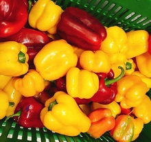 Fresh Bell pepper/color capsicums, Fresh Style and Green Color red bell pepper