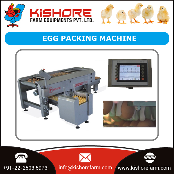 Standard Certified Company Egg Grading Packing Machine for Export Market