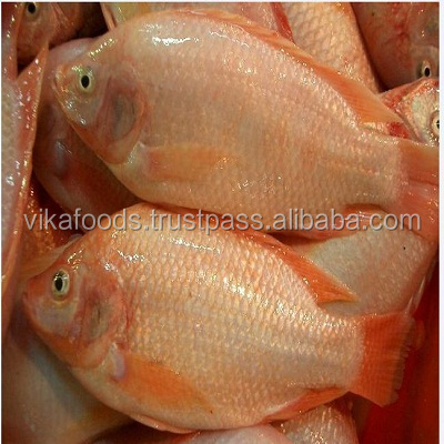 High Quaility Seafood Fish Frozen Red Snapper/ Fish Red Snapper/ Price Red Snapper