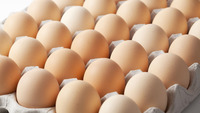 Farm Fresh poultry white shell chicken table eggs