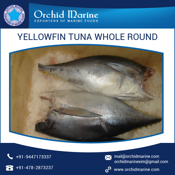 Amazing Taste Highly Pure Yellowfin Tuna Prices from Manufacturer