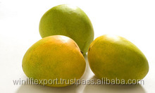 Fresh Alphonso Mangoes Exporters in India