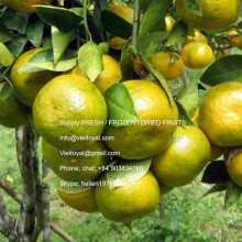 FROZEN CALAMANSI FRUIT TOP QUALITY ( FROZEN/ DRIED)