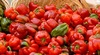 /product-detail/fresh-pepper-for-sale--50028124202.html