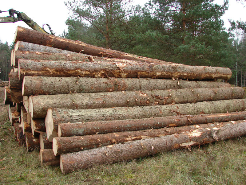 White Oak logs and Red Oak logs and lumber