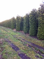 Ornamental Garden Trees, Conifers And Bushes
