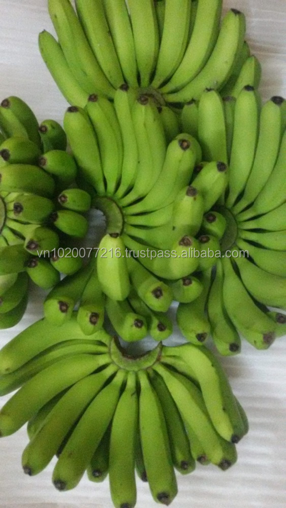 HIGH QUALITY FRESH BANANA// VIETNAMESE FRESH FRUITS/ Viber : + 84 1229256951/ What's up: + 84981877336