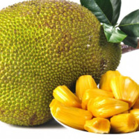 JACKFRUIT FREEZE DRIED NO SUGAR