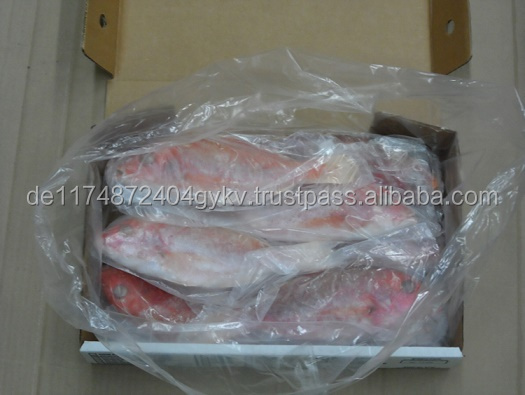 Frozen Red Snapper Fish For Sale