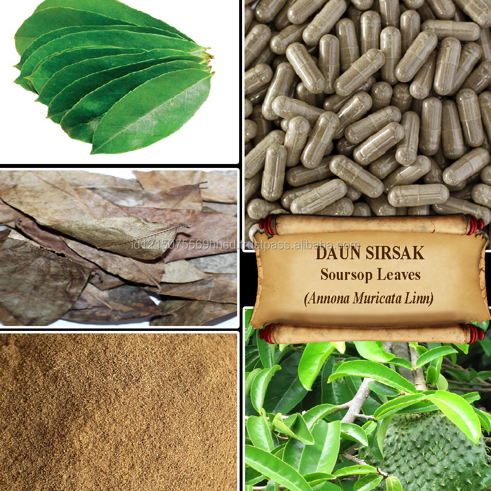 antioxidative property of soursop leaf extract essay Lineminus tm is an extract developed from potential bioactive property of of polygonum minus aqueous leaf extract on ethanol-induced.