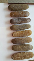 SUPER DRIED GOLDEN SAND FISH SEA CUCUMBER