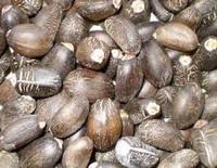 High quality new crop jatropha seeds for sale