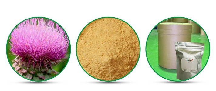 China HACCP FDA manufacturer free sample 80% silymarin Milk Thistle extract