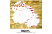 Vietnam natural seashell for gift, home decoration, seasonal holidays