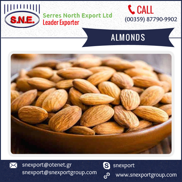 2016 New Arrival Raw Almonds of Top Quality at Very Affordable Rate