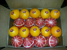 bulk fresh Oranges fresh oranges importer fresh oranges wholesale