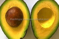 Supply Fresh Avocados Fruit from Vietnam with Best Price and High Quality