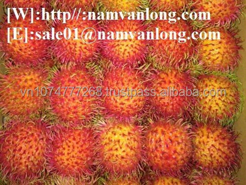 NEW ARRIVAL FRESH RAMBUTAN VIETNAM HONEY SWEET/ FRESH RAMBUTAN FOR SALES
