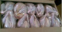 TOP Brazilian Quality Halal Frozen Whole Chicken and Parts / Gizzards / Thighs / Feet / Paws / Drums