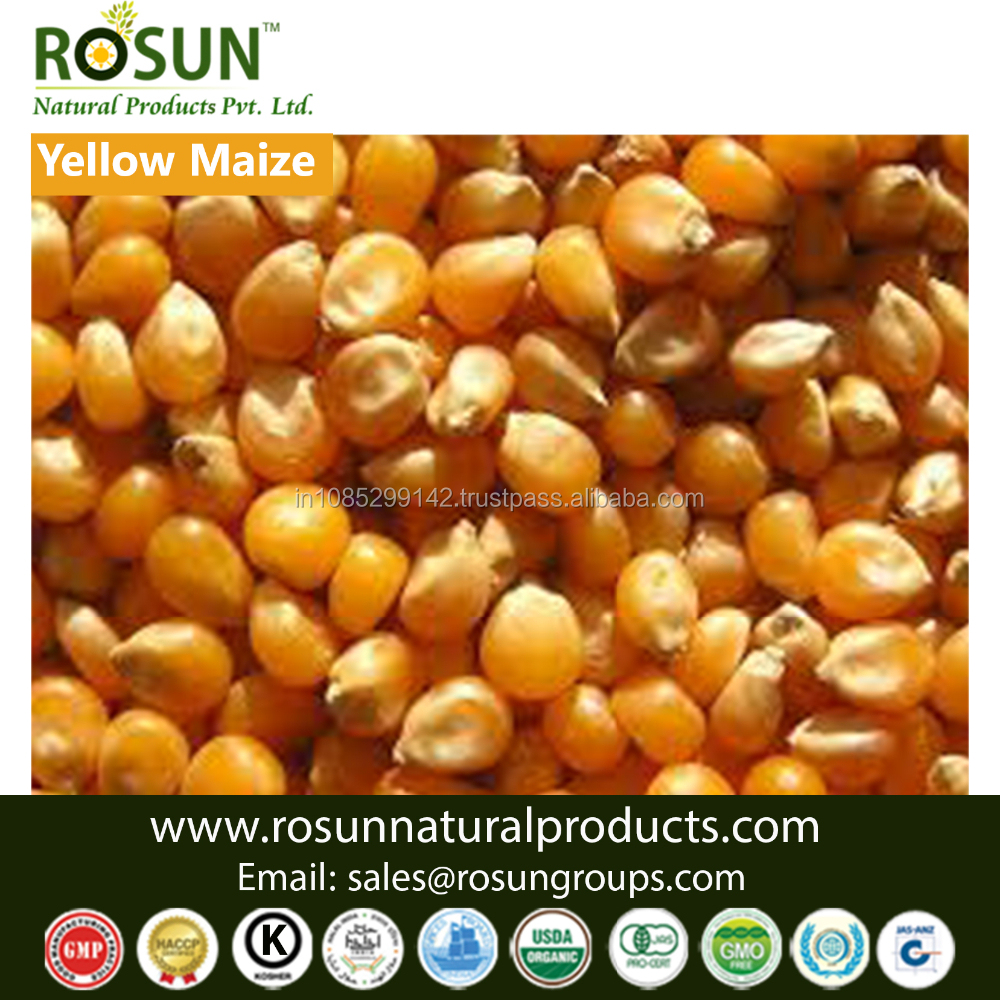 Organic and Conventional Yellow corn - ROSUN NATURAL PRODUCTS PVT LTD