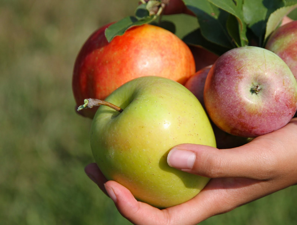 Sweet fresh delicious apple fruit at moderate cost