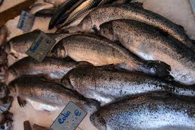 Fresh and Frozen Salmon Fish Top Quality.