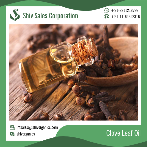 Best Quality Organic Clove Leaf Essential Oil at Best Price