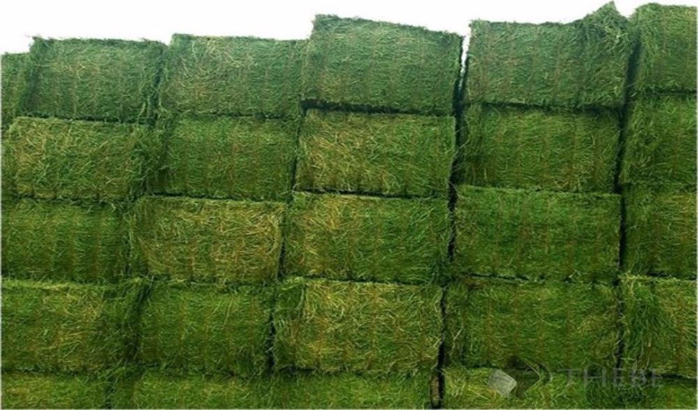 timothy hay / alfalfa hay for sale