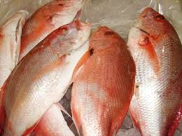 Frozen Red Sea Bream Fish