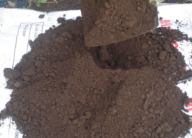 Vermicompost worm casting earthworm