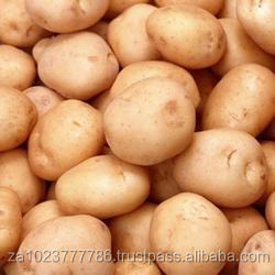 SOUTH AFRICAN Fresh Potato and Onion FOR SALE