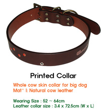 Collar & Leash for Dog