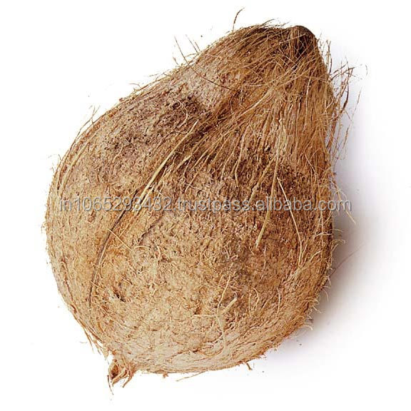POLLACHI COCONUT WITH BEST QUALITY