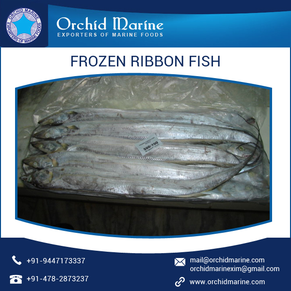 Aquatic Food Marine Ribbon Fish/ Peixe Espada/ Trichiurus Lepturus Supplier