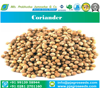 Indian Origin Parrot Quality Coriander Seeds