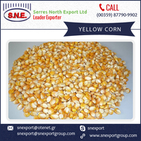Yellow Corn for Animal Feed Suppliers in India