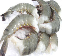 Fresh Chilled Vannamei White Shrimps and Black Tiger Shrimps