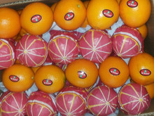 would you need fresh , better price , excellent and very good oranges