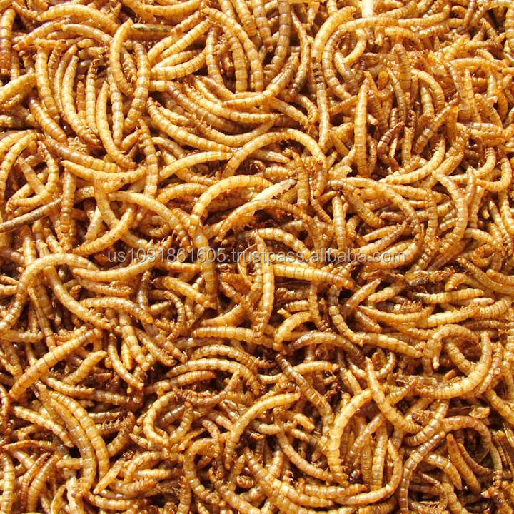 Wholesale Meal Worms Dried Poultry Feed