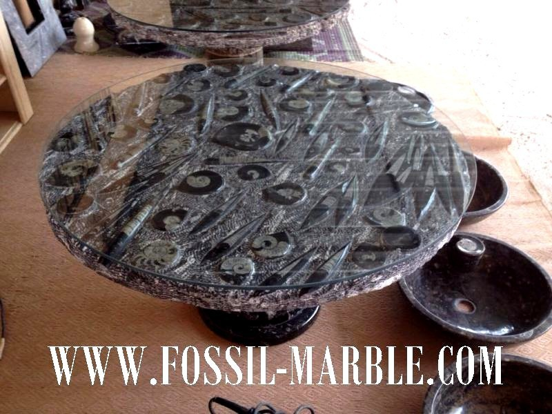 Table black with natural fossis Ammonites and Orthocerases