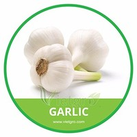 HIGH QUALITY FRESH GARLIC // LY SON GARLIC // VIETNAMESE FRESH VEGETABLE