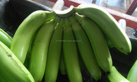 best indian banana for sale